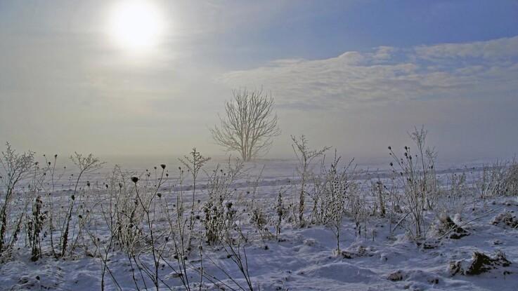 Kulde rammer køer og kalve