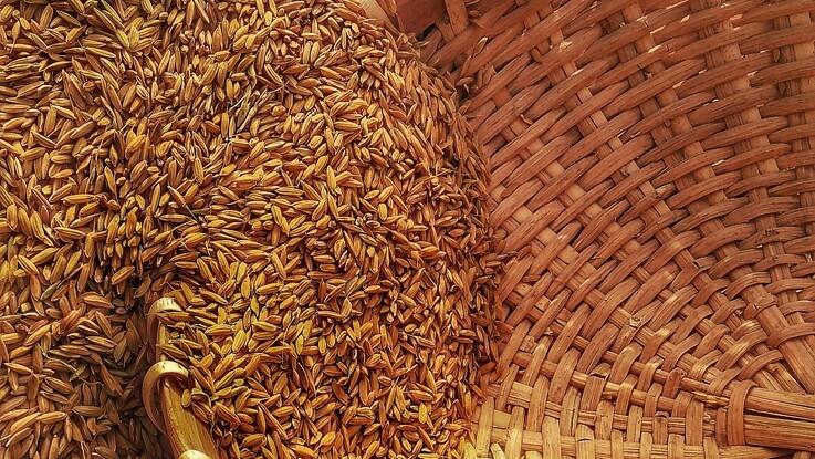 Rapport: Den globale fødevareproduktion skal øges