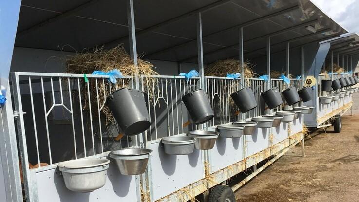 Probiotika-produkt har vist lovende resultater med kalve