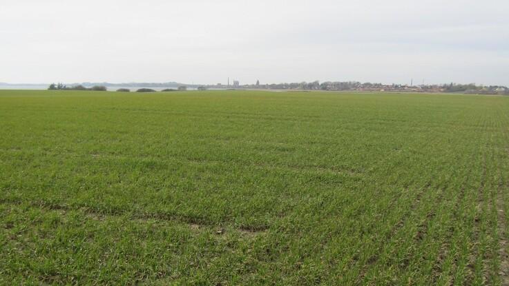 Dansk landbrug binder CO2 svarende til hele landets udledning