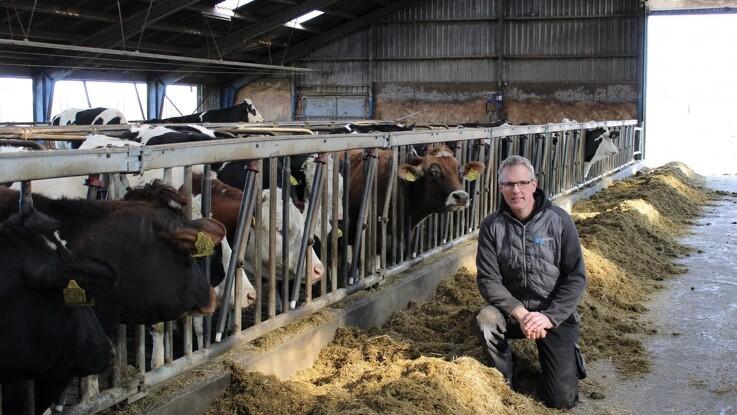 Tidlig indsats giver færre døde køer