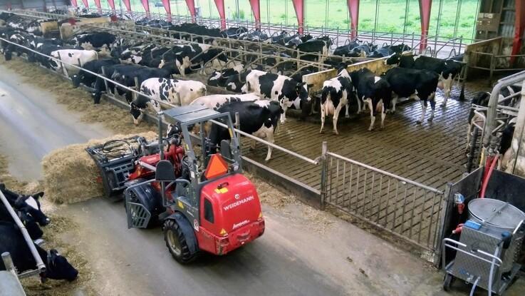Seks robotter malker 300 køer