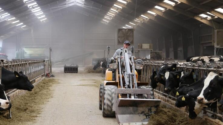 Fokus på management giver sunde køer