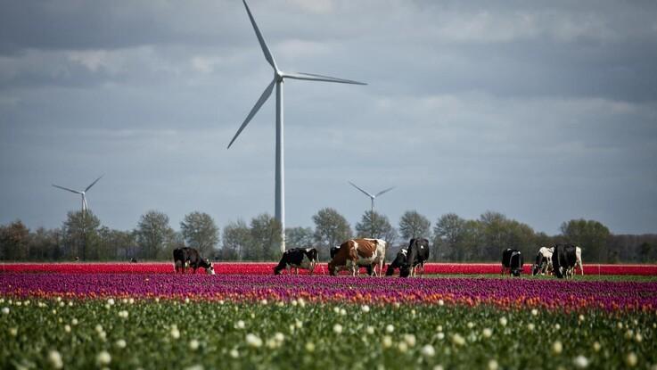 Danmark vil kun delvis følge udviklingen i Holland