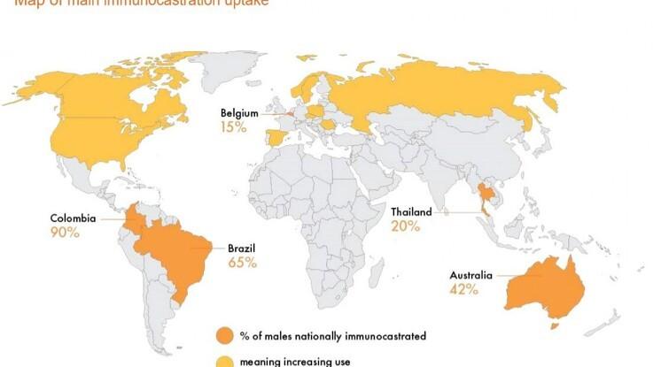 Immunokastration vinder frem i Verden
