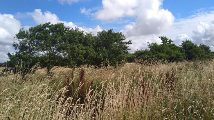 Landbrugsdrift og naturforvaltning