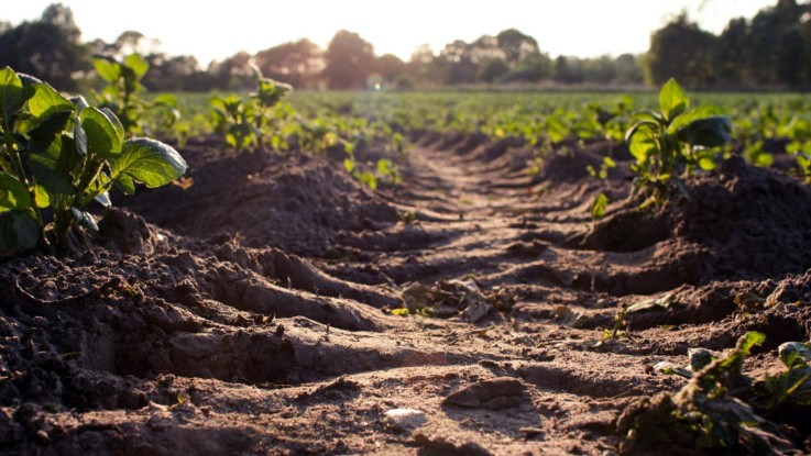 Dyrk mikrobiologien i din jord