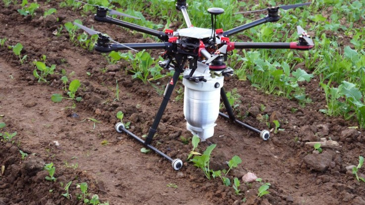 Drone bekæmper rapsjordlopper med nyttedyr