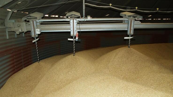 Fugtigt korn inviterer lagersvampe indenfor