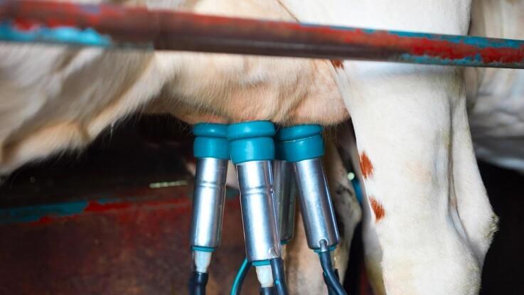 Opskriften på en 100.000 kilos ko