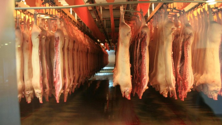 Overproduktion presser det europæiske grisemarked