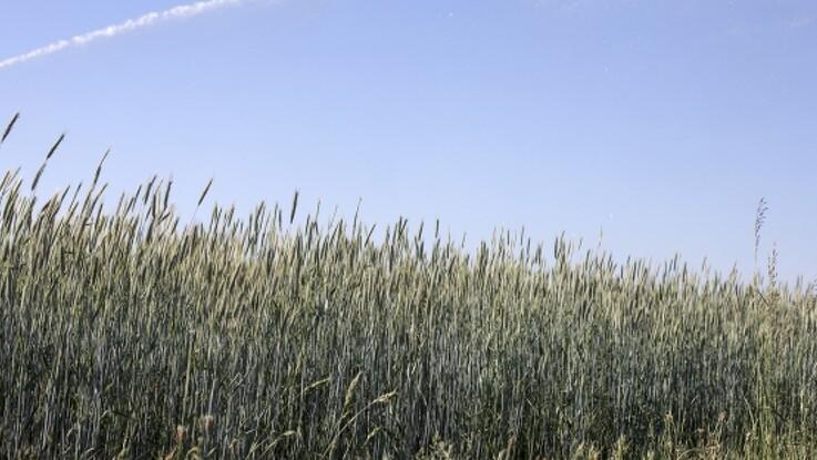 Landbrugsstyrelsen udbyder 326 ha arealer