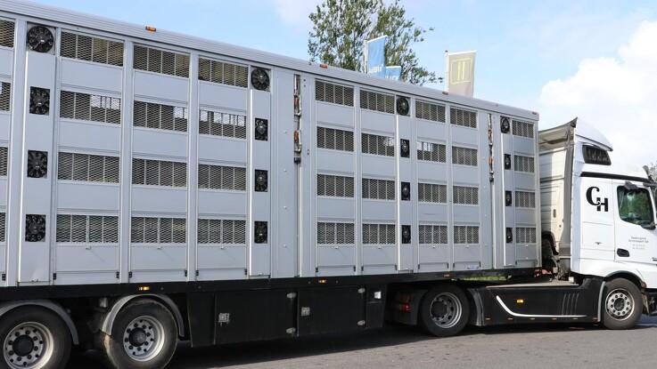 Lastbiler kan slæbe svinepest med ind i Danmark