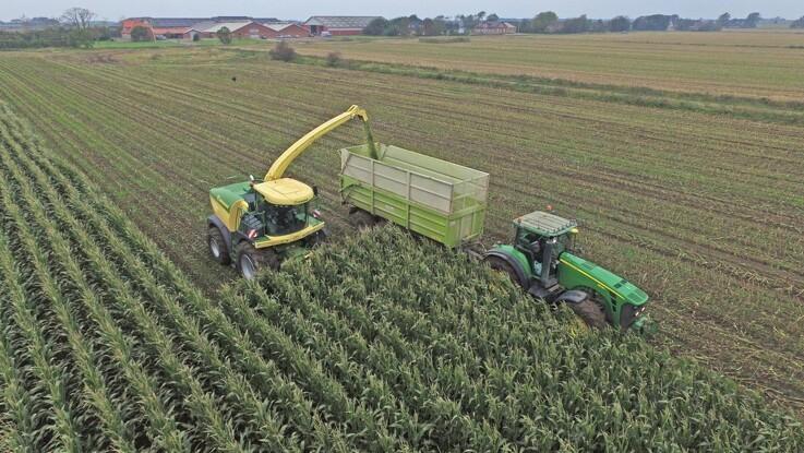 Kina køb stort ind af amerikansk majs