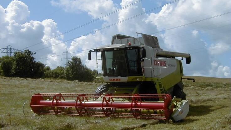 Ekstra høsthjælp kan redde store frøgræs-værdier i Nordjylland
