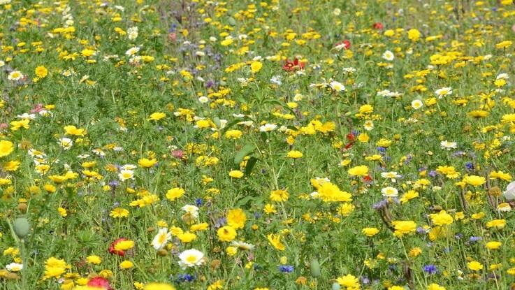 Lad blomsterstriberne stå