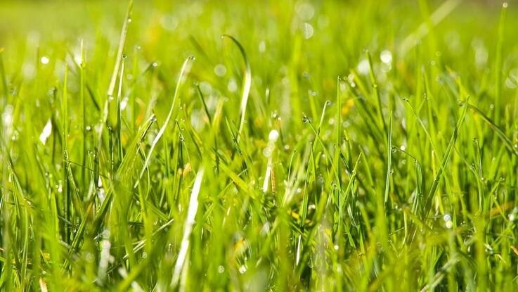 Græs skal erstatte soja