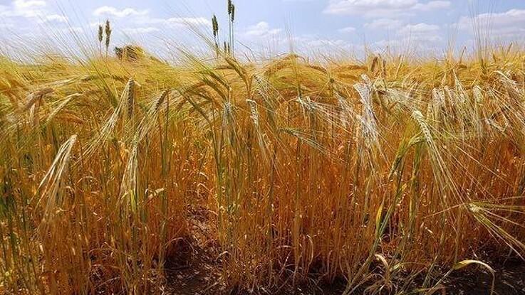 Topdanmark: Et mere ustabilt vejr giver modvind til landbruget