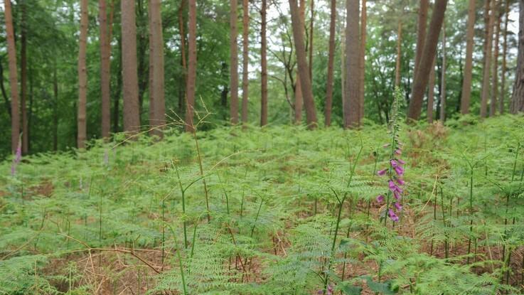Over 4.400 ældre træer kan nu blive bevaret
