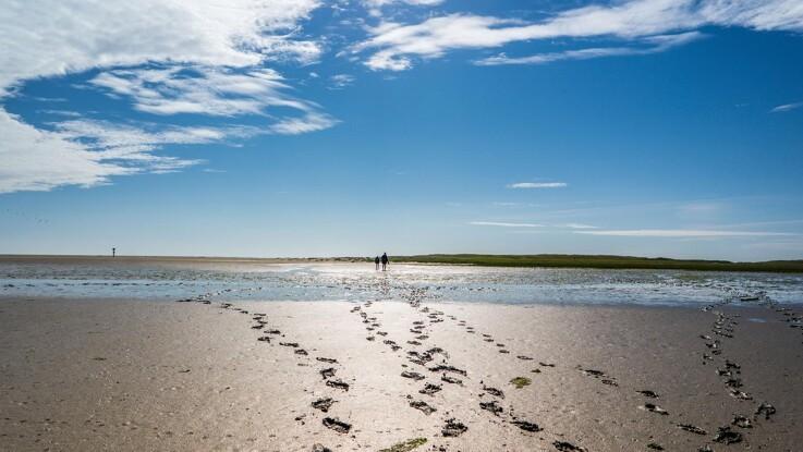 Fejl i beregninger skyld i mere kvælstof i havene
