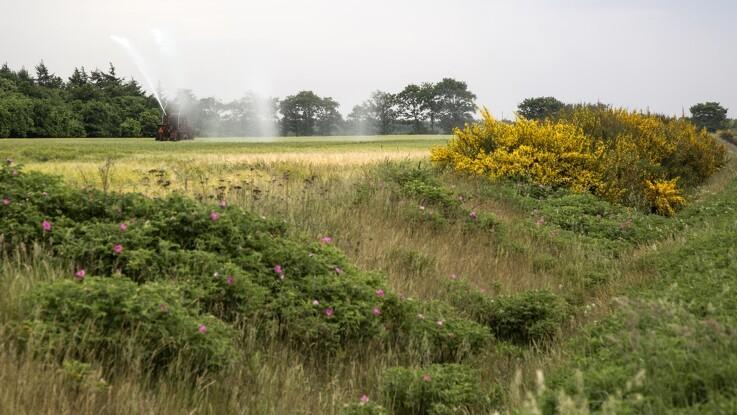 Efter stor interesse: Dobbelt så mange hektar kan få fri jordfordeling allerede i år