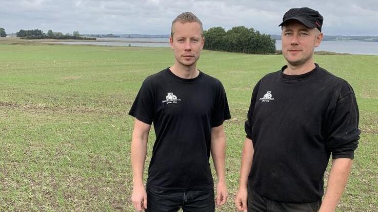 Enorme flokke af bramgæs er blevet en plage på Bogø