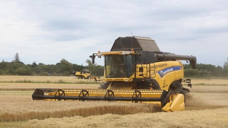 Jyske Markets: Kontraktmisligholdelse blandt majsproducenter