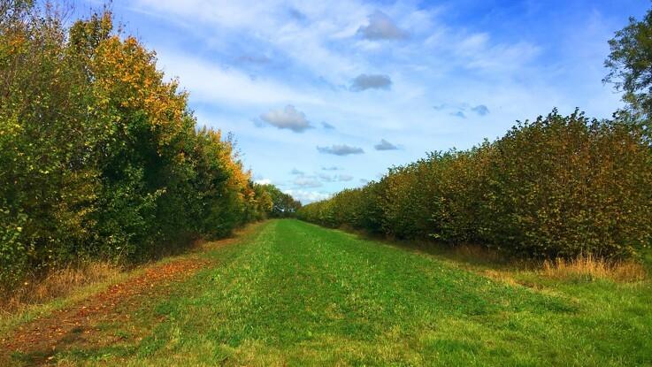 Økologer præsenterer ny model for et bæredygtigt fødevaresystem