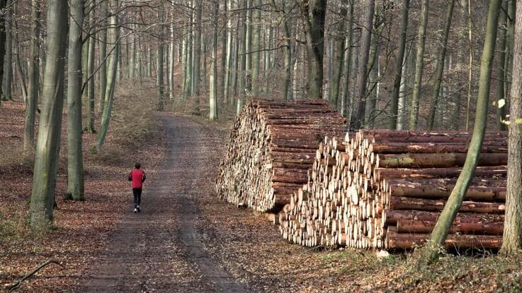 Danmarks klima-skovfond er en realitet
