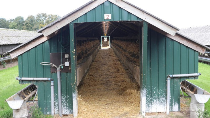 Universitet: Måger kan være skyld i Covid-19-spredning blandt minkfarme