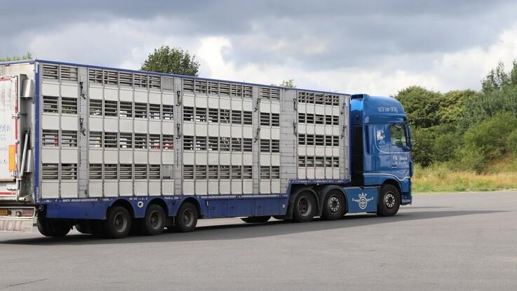 Danske Svineproducenter: Urimeligt, at chauffører risikerer bøder
