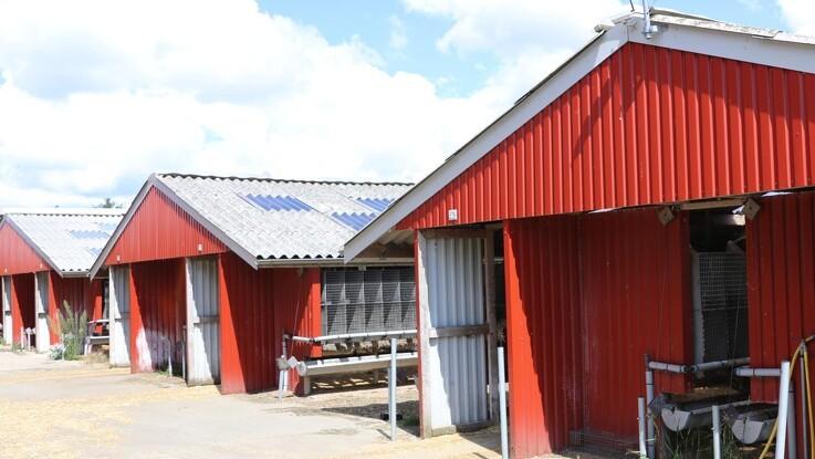 Aflivning på farm i Hjørring sat på stand-by