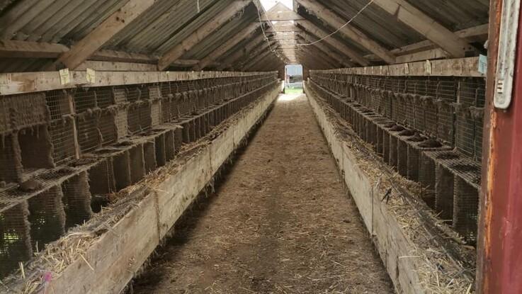 158 smittede minkfarme