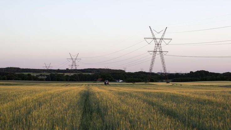 Jyske Markets: Palmeolien rammer højeste niveau i otte år