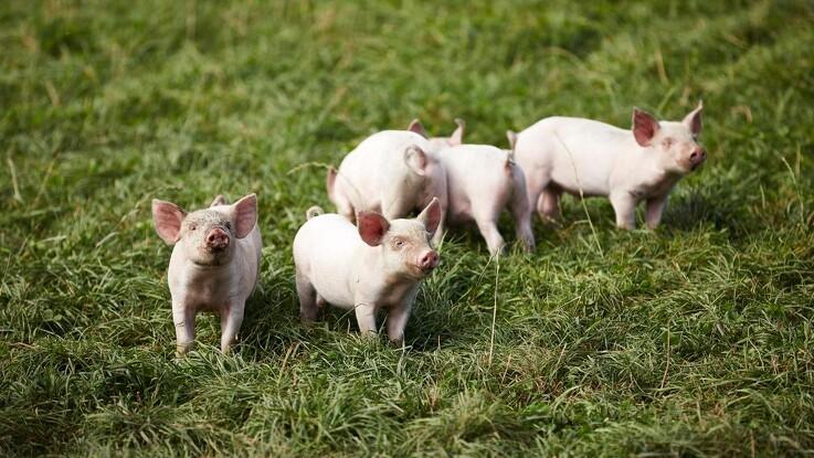 Friland går frem: Særligt økologiske koncepter løfter omsætningen
