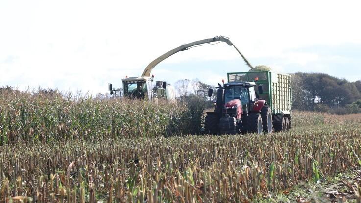 Afgrødekommentar: Lavere global majsproduktion i sigte