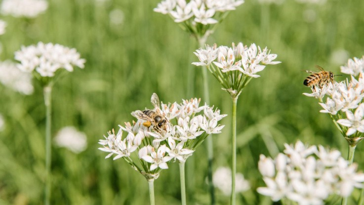 Konkrete tiltag til mere biodiversitet