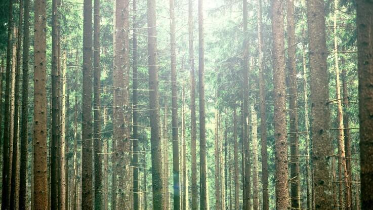 15 millioner kroner urørt skov og blomstrende enge
