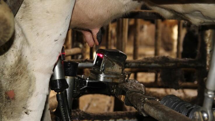 Rekordmange har søgt om støtte til mejeriforskning