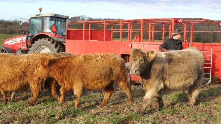 50 pelsede naturskabere sat fri på Langeland