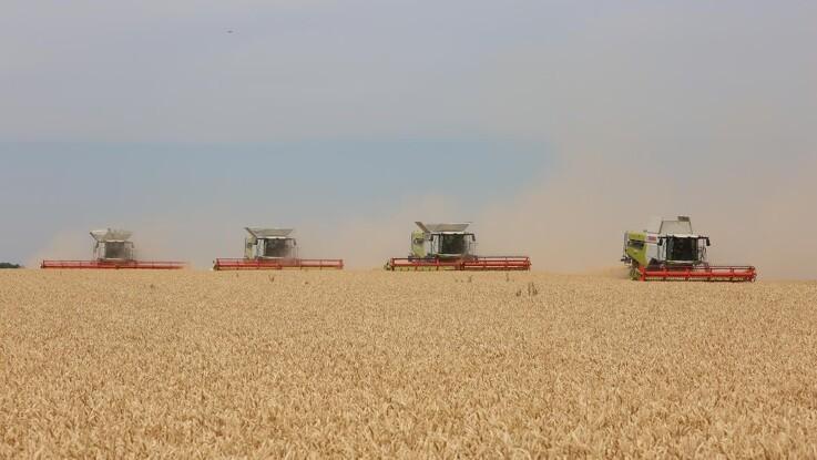 Argentinske hvedeeksportrestriktioner kan være på vej