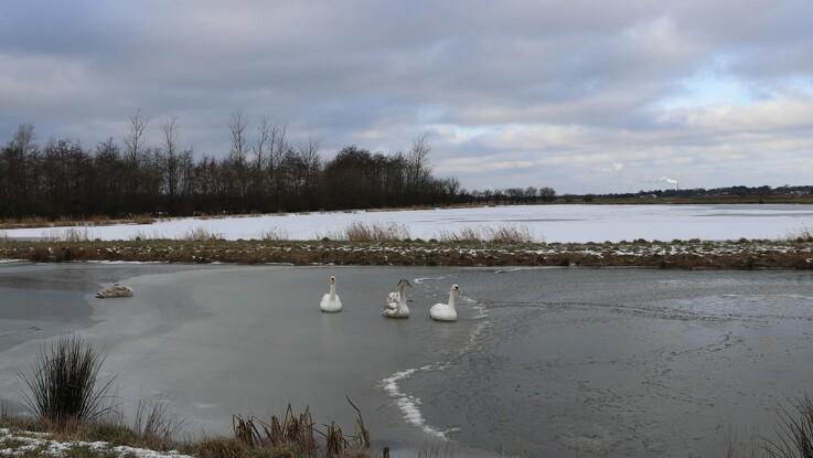 Fem minivådområder i Hals mindsker udledning og skaber naturoaser