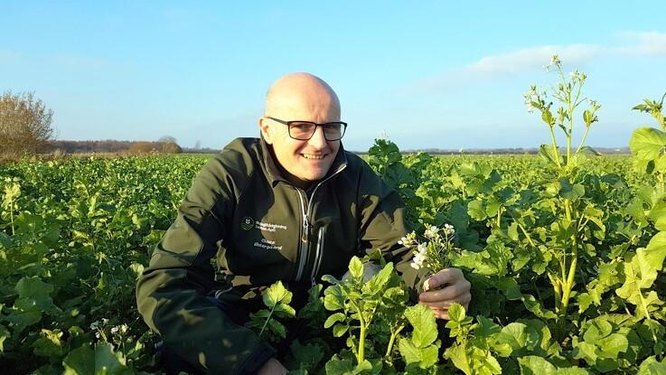 ØkologiRådgivning Danmark: Nye efterafgrøder åbner for økologisk kvalitetskorn
