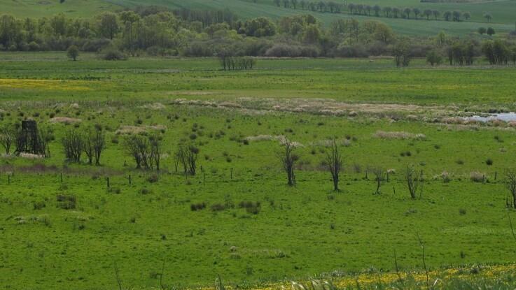 Landboforening kigger på projekter om lavbundsarealer