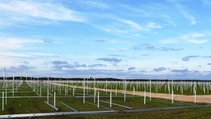 Frøfirma i Holstebro vækster - leverer græsfrø til solcellepark