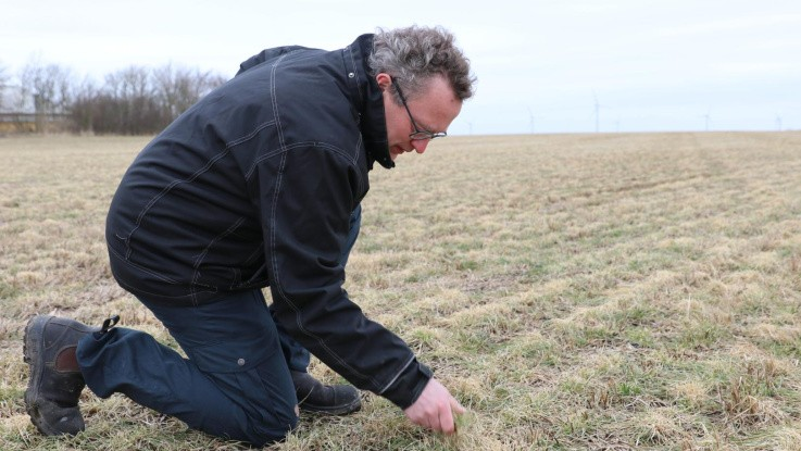 Problemulv presser fårene væk og betyder store udbyttetab og øgede udgifter