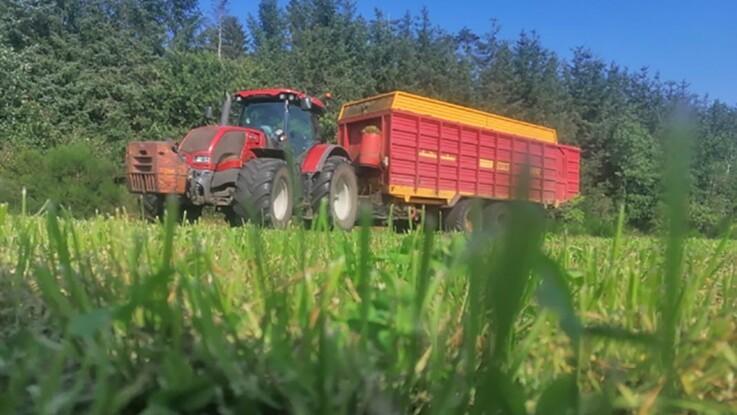 Friskt græs giver glade køer