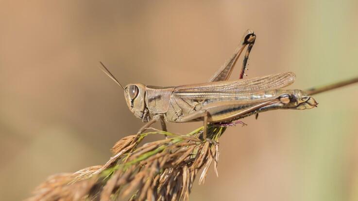 Ny opfindelse kan skelne skadelige insekter fra gavnlige
