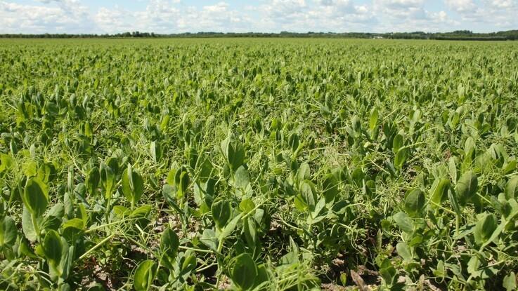 Ni landbrugsforeninger: Det afgørende er en bred politisk aftale