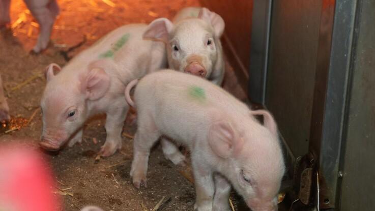 Dansk landbrug skal effektivisere - for klimaets skyld